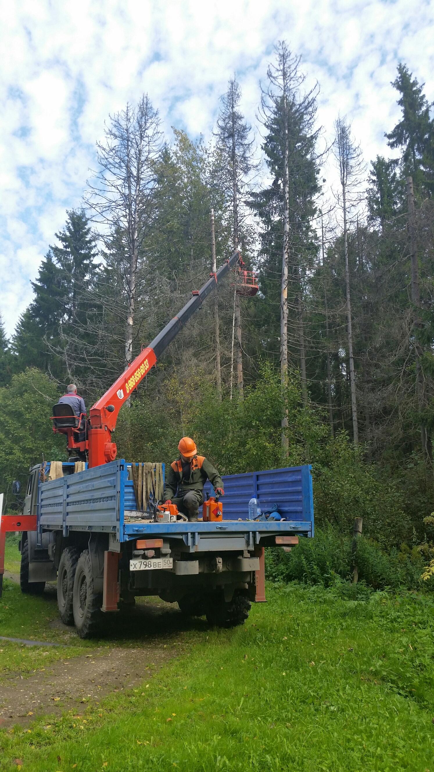 Обрезка деревьев 2017